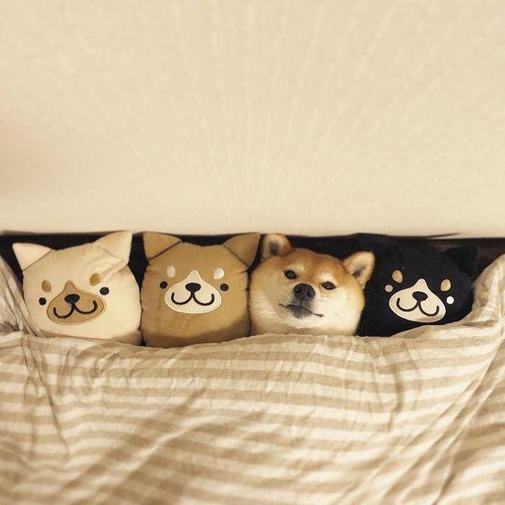 犬のおもしろ画像