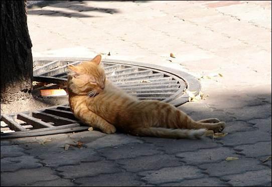 猫のうたた寝