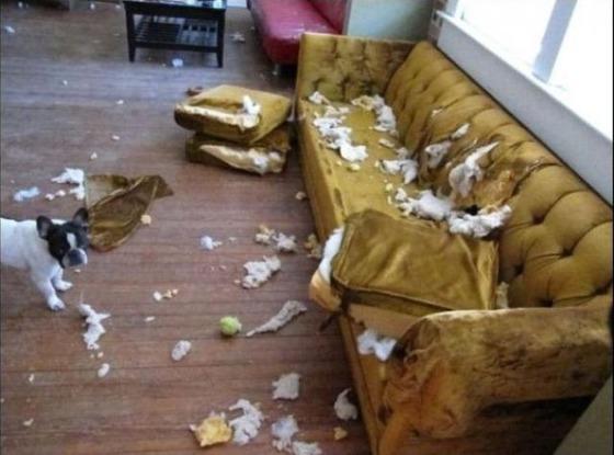 犬がソファーをぐちゃぐちゃに