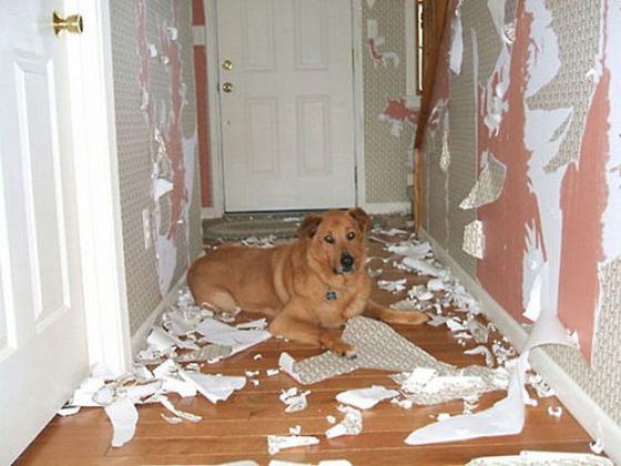 犬が壁紙をやらかした