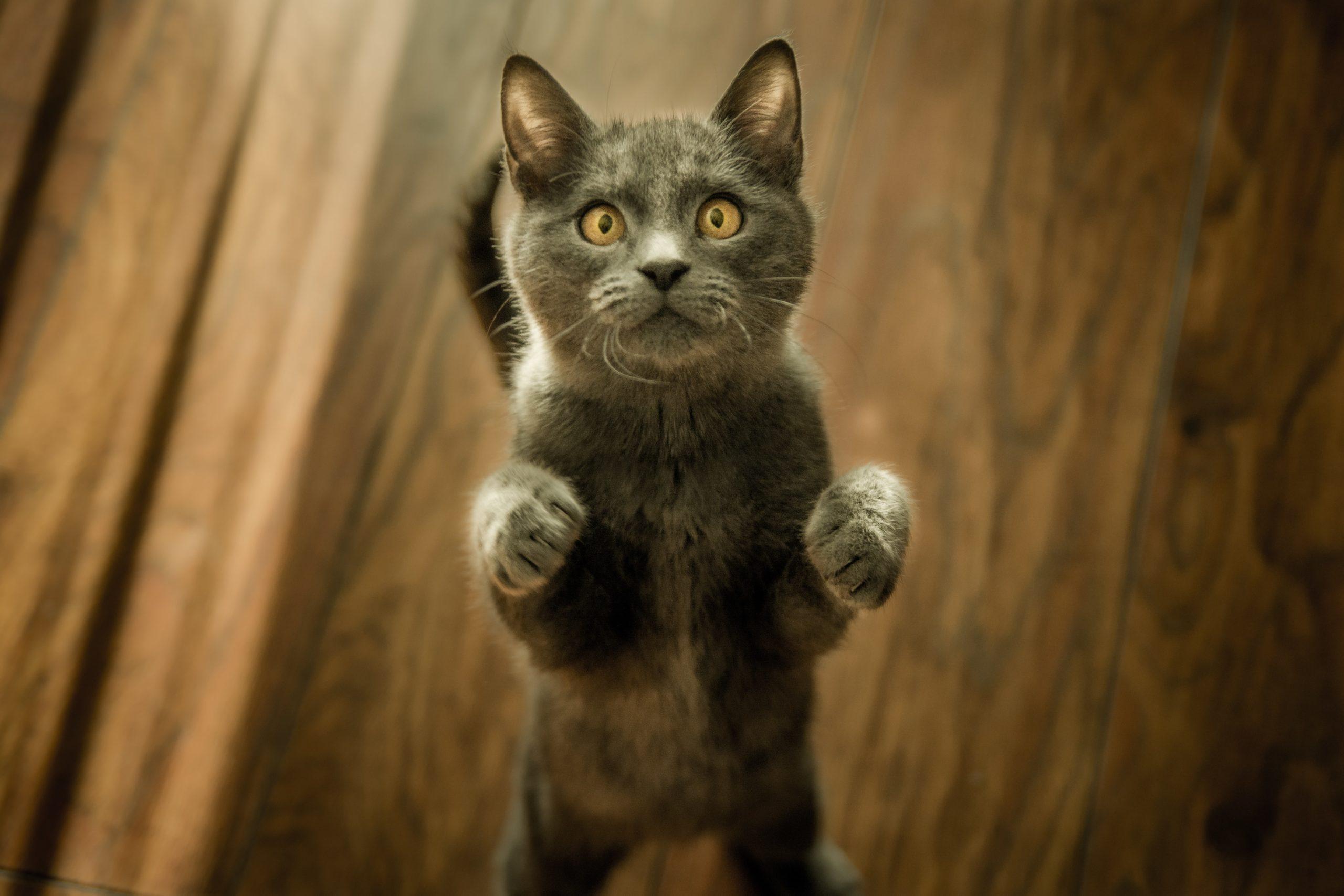 世界の猫おもしろ動画10選