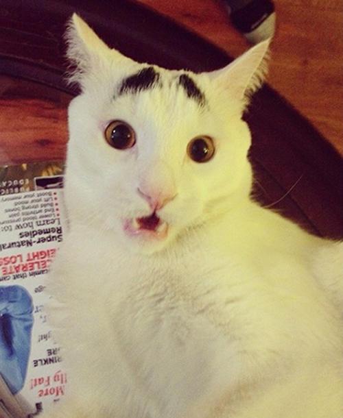 ひょうきんな顔の猫
